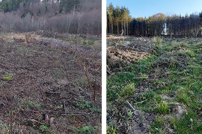 reboisement d'un terrain en friche avant et après